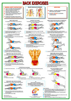 Professional Fitness Wall Chart BACK EXERCISES Workout Guidelines Poster