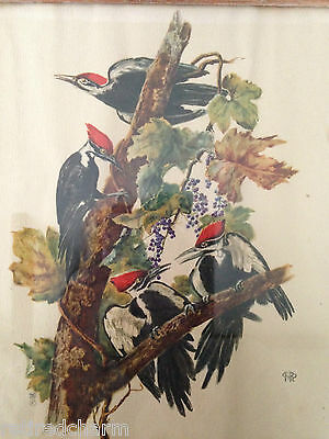 ❤️Very Old Woodpeckers Original Print Circa 1950's Beautiful Signed Rare Frame❤️