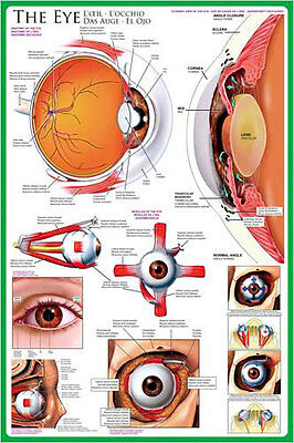 THE ANATOMY OF THE HUMAN EYE Medical Science Wall Chart Educational POSTER