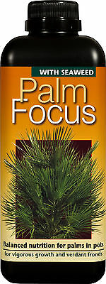 PALM FOCUS - 1 Litre - Nutrients for Palm Trees and Cycads