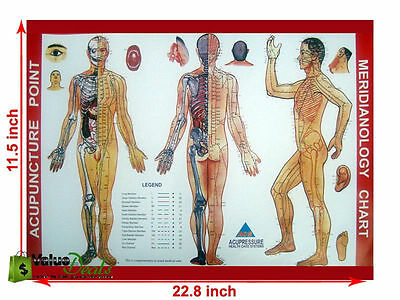 Acupressure Meridianology Chart Sujok Quick Study Educational Academics Teaching