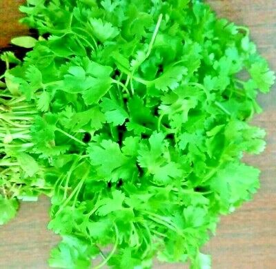 CORIANDER SLOW BOLT 30 SEEDS Leaf Salads Herb Non-GMO Containers Heat Tolerant