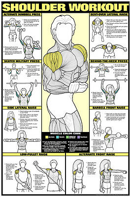 Co-Ed SHOULDER WORKOUT Professional Weight Training Fitness Chart Poster