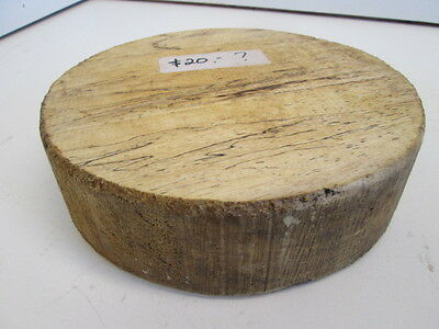 Exotic Spalted Wood Bowl Blank (2 1/4'' x 8'')