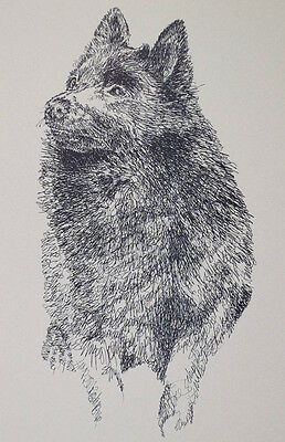 Schipperke Dog Breed Art Print Signed Lithograph #79 Kline adds dog name free.