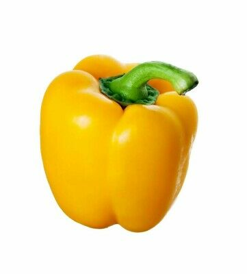 California Wonder Yellow Pepper 25 Seeds Containers Heirloom Non-Gmo Sweet Hardy