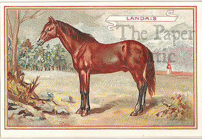 Antique Vintage French Chromo Trade Card Chicory Coffee Landes Ladais Horse