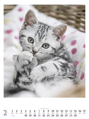 CALENDRIER 2016 -48x64 - CATS - CHATS
