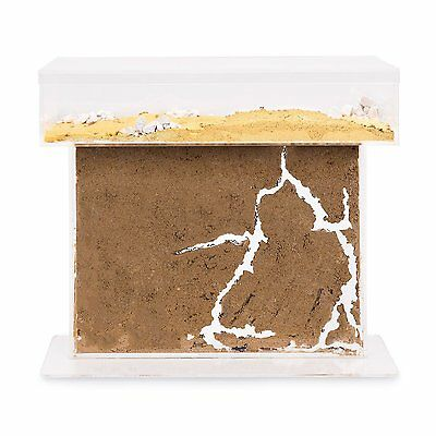 Sand Ant Farm T  BIG (Anthill, Formicarium, Educational, Ants)