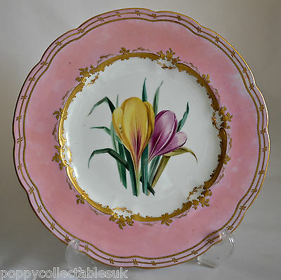 """Beautiful Hand Painted 9.5"""" Cabinet Plate - Flowers With Pink And Gilt Wavy Rim"""