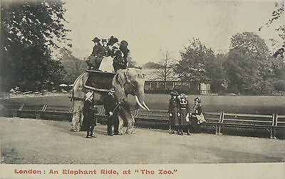 VINTAGE POSTCARD.LONDON ZOO.TOPOGRAPHICAL CARD. EARLY 1900's.AN ELEPHANT RIDE