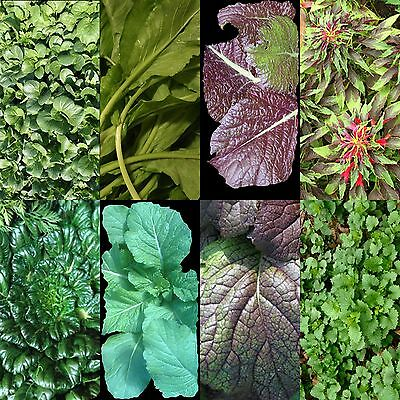 200 Asian Greens Mix Seeds Summer Planting Salads Heirloom Non-Gmo Flavorful Usa