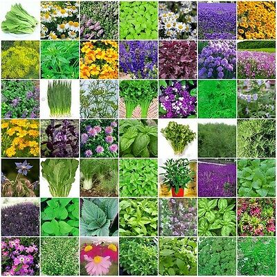 Herb Seeds VARIETIES TO CHOOSE FROM Top Quality Everything you need is here