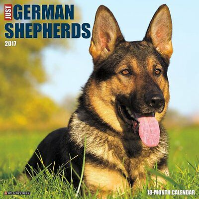 2017 Just German Shepherds Monthly Wall Calendar  Dog Puppy Pooch Cute Doggy