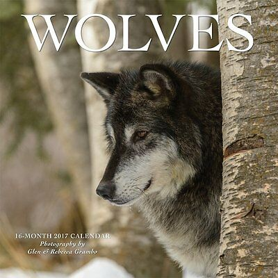 Wolves 2017 Monthly Wall Calendar - Animal Wild Howl Nature Photography Winter