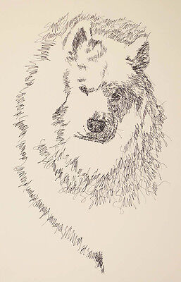 SAMOYED DOG ART PORTRAIT PRINT #78 Stephen Kline will add your dogs name free.
