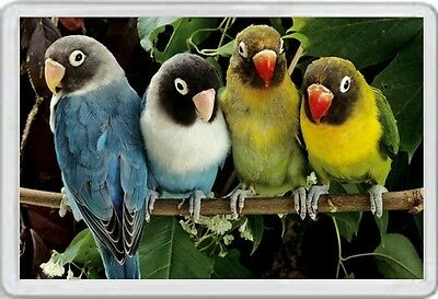 Lovebirds - Jumbo Fridge Magnet - Masked Love Birds Lovebird Parakeet Parrots
