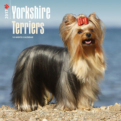 Yorkshire Terriers - 2017 Wall Calendar - 12x12 - Animals Dog