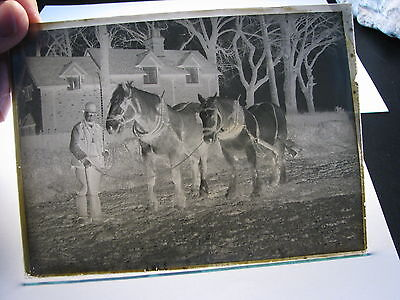 4 Farming agriculture (Reading maybe) antique glass plate negative photos 8844