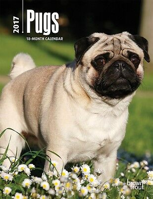 Browntrout Hunde Wochenplaner 2017:Pugs - Mops