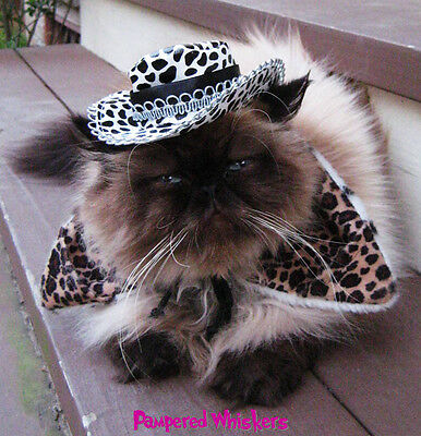 Midnight Cowboy hat for cats and Wild Side collar