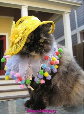 Little Miss Sunshine hat for cats and dogs and Lifes a Ball party collar