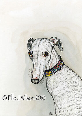 Whippet   Art Dog Print