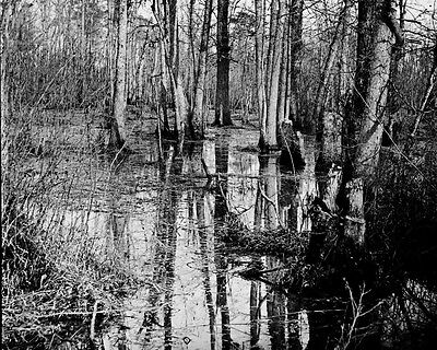 New 11x14 Civil War Photo: View of White Oak Swamp, 1862