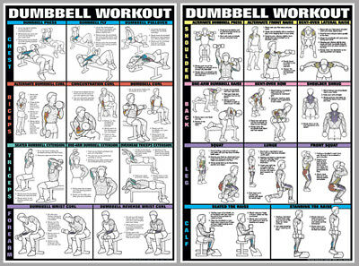 DUMBBELL WORKOUT Dumbells Free Weights Pro Fitness Wall Charts 2 POSTER SET