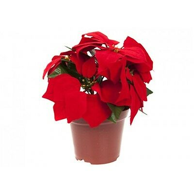 Battery Opperated Light Up Poinsettia Flowers In Brown Planter - Flower Pot