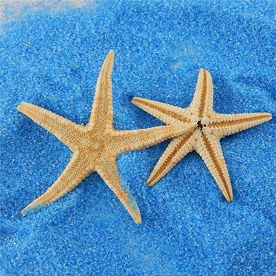 3cm-5cm Mini Seashells Sea Star Small Real Starfish Crafts Landscape Decor 20pcs