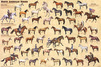 North American Horses Educational Chart Poster Poster Print, 36x24