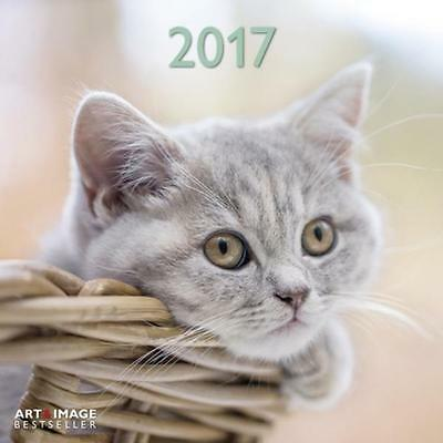 CALENDRIER 2017 - CHATS - CATS - 30 x 30 cm