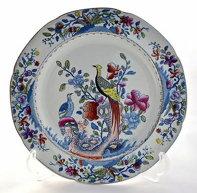 Antique Spode Stone China *pheasant* Printed & Over Painted Plate 2240 C.1813-22