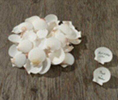 New! Lillian Rose Natural Guest Signing Shells For Alternative Guestbook