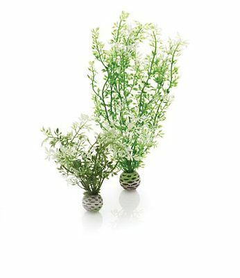 Biorb Easy Plant Winter Flowers Medium Pet Easy To Clean New
