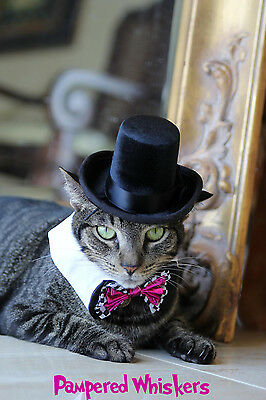 """The Aristocrat top hat for cats and dogs and 7-10"""" Wild Card Bowtie collar"""