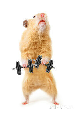 Hamster With Bar Isolated On White Poster Print by IgorKovalchuk, 13x19