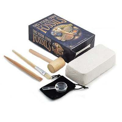 Dig Your Own Fossil Kit Children's Activity Set Christmas Gift Real Fossils