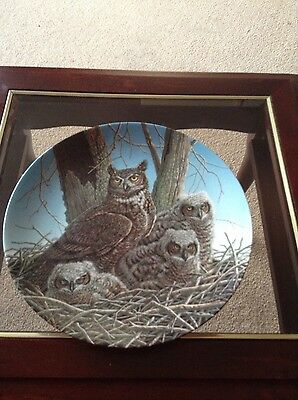 the great horned owl collectors plate by artist jim beaudion