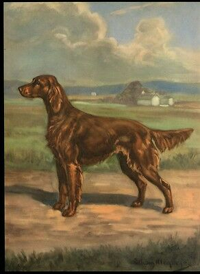 Irish Setter: after Painting by Edwin Megargee: Authentic 1953 Book Illustration