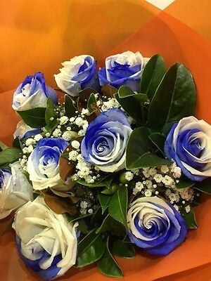 10 x Blue and White Rose Seeds!! Free Fast Sydney Shipping