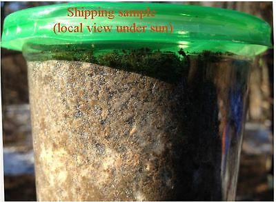 20 oz (550 g) Morel Mushroom Soil Spawn, mycelium colonized nutrient soil
