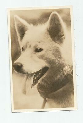 1930's ALASKAN MALAMUTE DOG REAL PHOTO POSTCARD SLED GOWEN SUTTON VANCOUVER BC