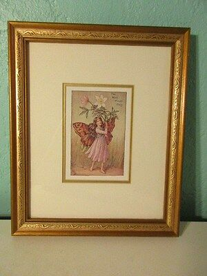 Cicely Mary Barker The Wind Flower Fairy Framed Print Vintage