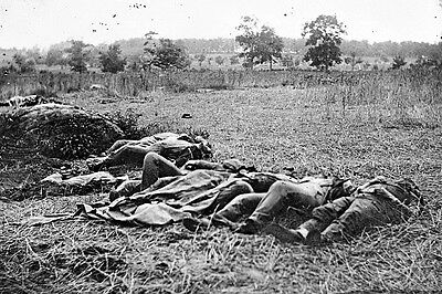 New 4x6 Civil War Photo: Dead in The Wheatfield after the Battle of Gettysburg