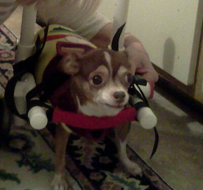 Mini Dog wheelchair for your handicapped pet