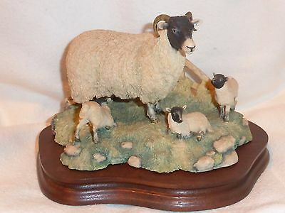 Border Fine Arts Black Faced Sheep And Lambs Figurine James Herriot Collection