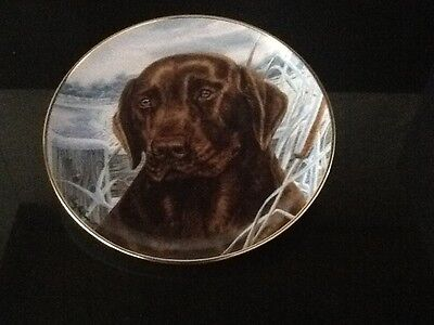 franklin mint limited edition chocolate labrador plate