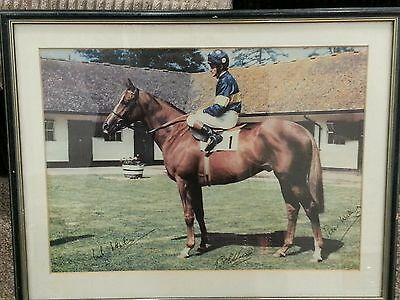 Horse racing PAT EDDERY.GRUNDY.SIGNED BY JOCKEY OWNER AND TRAINER.